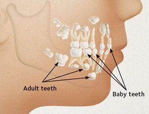 denti-lattante2